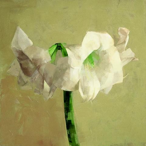 STILL LIFE White amaryllis