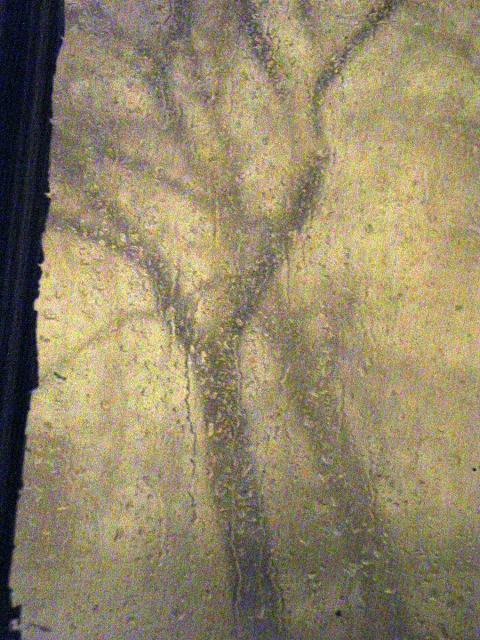 Photography Dark Tree Light
