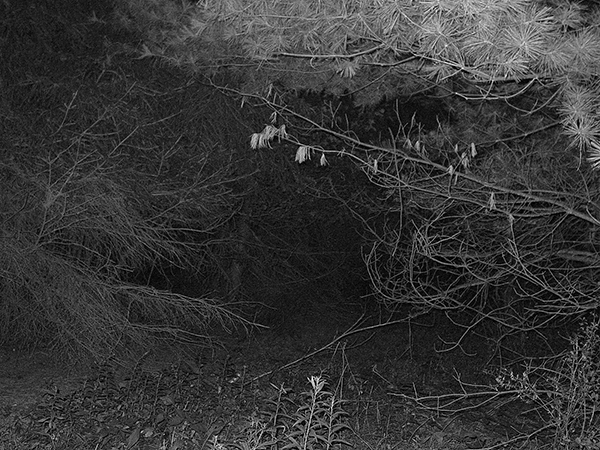 Photography Meadow's Edge