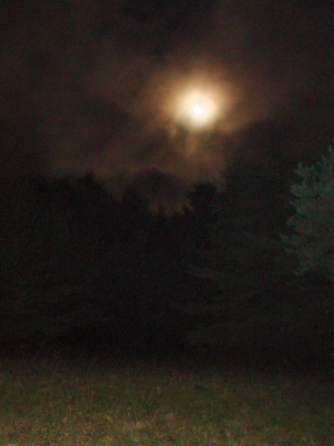 Photography Moon Meadow