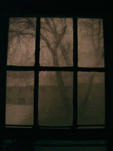 Photography Tree Window