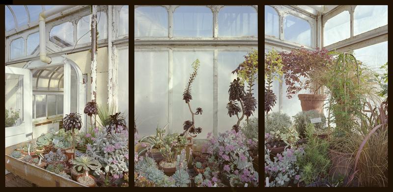 Succulents<br/>