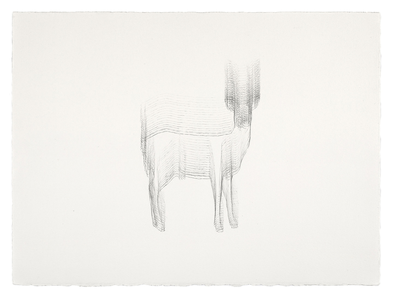 Sorry Deer  Graphite on Paper