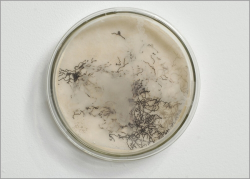 Field of Vision(for Mary)  Petri dish, mixed media