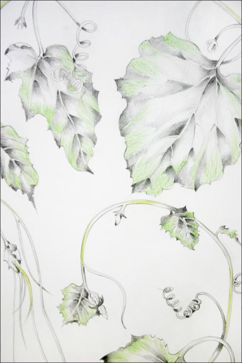 Pat Cresson : • Drawing> Botanical Drawings