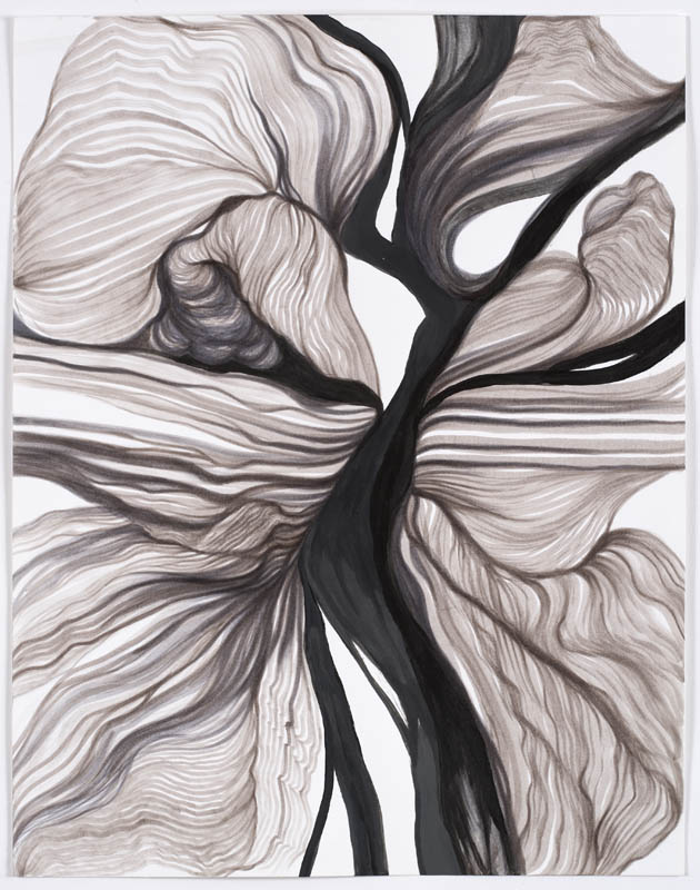 "Botanicals (series) 2008-2009 ""Untitled"""