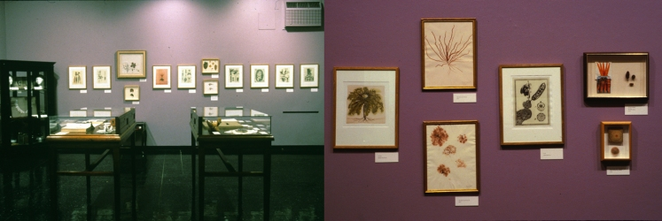 SUE JOHNSON Installation views of exhibitions (1995 - 2007) Intaglio prints, watercolors, herbarium pressings, found object constructions