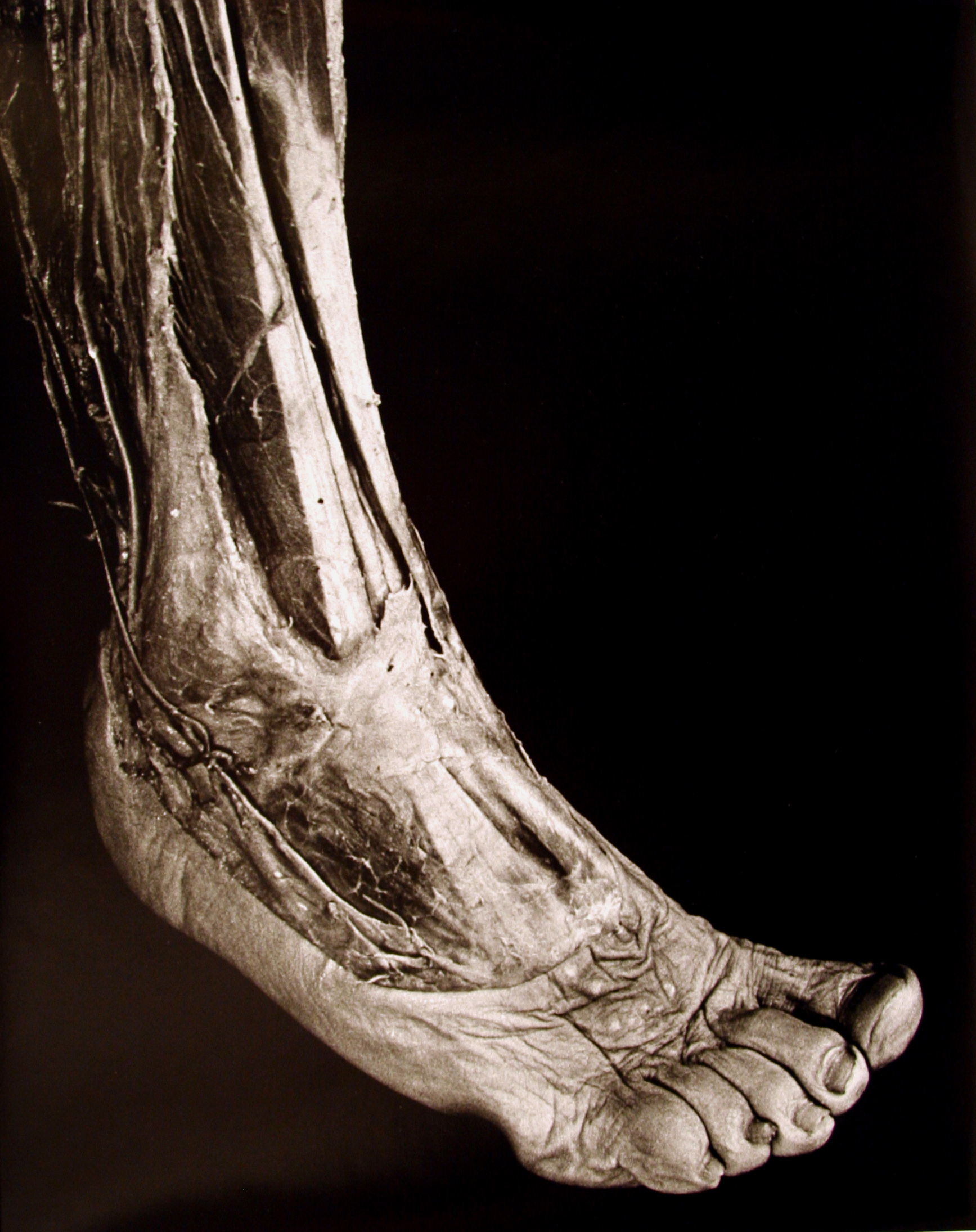 Anatomical Series